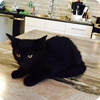 Adopt A Pet :: Hagar - Edmonton, AB