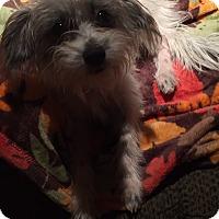 Adopt A Pet :: Patty Cakes - Cranford, NJ