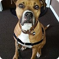 Adopt A Pet :: Nemmo - Livonia, MI