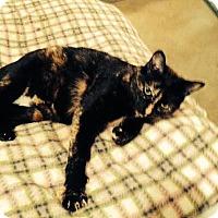 Adopt A Pet :: BC - Rochester Hills, MI