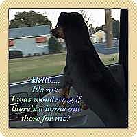 Adopt A Pet :: Kacie-Video! -- Valdosta, GA - McDonough, GA