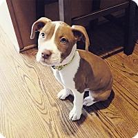 Adopt A Pet :: Dylan - Atlanta, GA