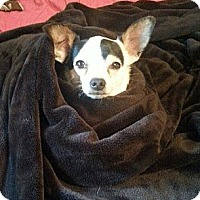 Adopt A Pet :: Paco - Aurora, IL