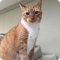 Adopt A Pet :: Mikey - Simpsonville, SC