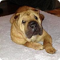 Adopt A Pet :: Tinsley - Durham, NC