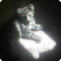 Adopt A Pet :: Mynxie - Kohler, WI