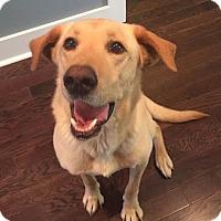 Adopt A Pet :: Stella - Huntsville, AL