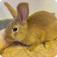 Adopt A Pet :: Pumpkin - Bonita, CA