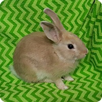 Adopt A Pet :: Grumpy - Baton Rouge, LA