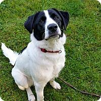 Adopt A Pet :: Padfoot (FKA Astro) - Cincinnati, OH