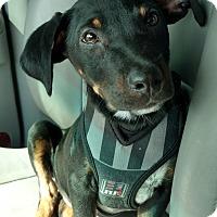 Adopt A Pet :: Manny - Tampa, FL