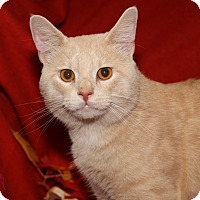 Adopt A Pet :: Buffington (Neutered) - Marietta, OH