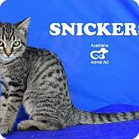 Adopt A Pet :: Snickers - Carencro, LA
