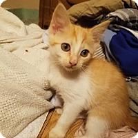 Adopt A Pet :: Skittles - Marietta, GA