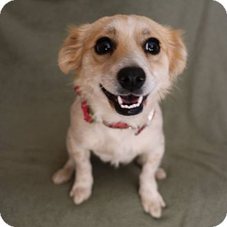 Terrier (Unknown Type, Small) Mix Dog for adoption in Yucaipa, California - Smiles