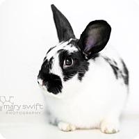 Adopt A Pet :: Kendall - Reisterstown, MD