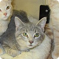 Adopt A Pet :: Scout - Rochester, MN