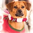 Adopt A Pet :: Dallas