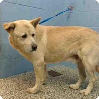 Adopt A Pet :: A500395 - San Bernardino, CA