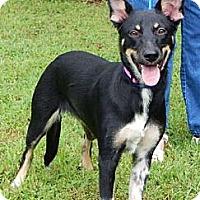 Adopt A Pet :: Phoenix (45 lb) Video! - Burlington, VT