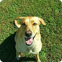 Adopt A Pet :: Star - Jacksonville, NC