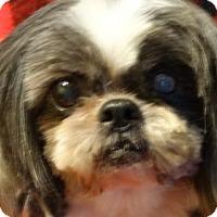 Adopt A Pet :: Ricki - Vacaville, CA