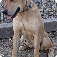 Adopt A Pet :: Beauty - Oak Brook, IL
