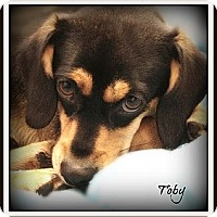 Adopt A Pet :: Toby - Pascagoula, MS