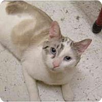 Adopt A Pet :: Gregory - No.Charleston, SC