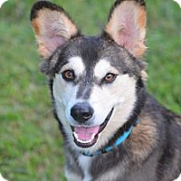 Adopt A Pet :: Shiloh - Plano, TX