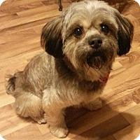 Adopt A Pet :: Barney - Russellville, KY