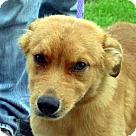 Adopt A Pet :: O'Reilly