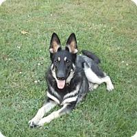 Adopt A Pet :: Koda - Quincy, IN