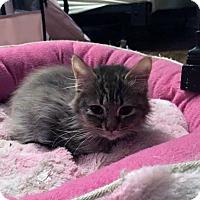 Adopt A Pet :: Algiers - Toms River, NJ