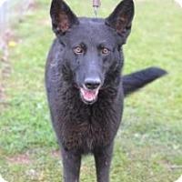 Adopt A Pet :: VIOLA - Albany, NY