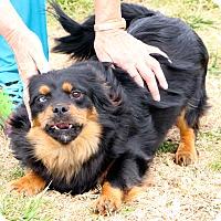 Adopt A Pet :: Antonio - Rochester, NY