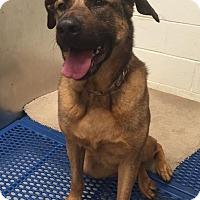 Adopt A Pet :: Miss Hurley - Troy, MI