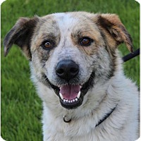 Adopt A Pet :: Rodeo - Red Bluff, CA
