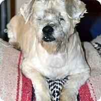 Adopt A Pet :: Jackson - Melrose, FL
