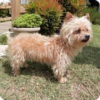 Adopt A Pet :: Toto - Tyler, TX