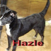Border Collie Mix Dog for adoption in Coleman, Texas - Hazle