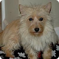 Adopt A Pet :: Nova - Lawrenceville, GA