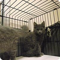Adopt A Pet :: Yummy Mummy - Chambersburg, PA