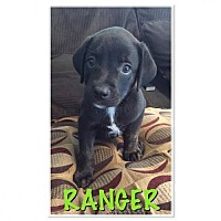 Adopt A Pet :: Ranger - Willingboro, NJ