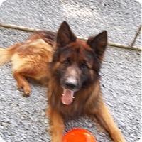 Adopt A Pet :: Blitz - New Ringgold, PA