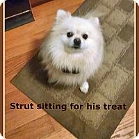 Adopt A Pet :: Strut - Franklinton, NC