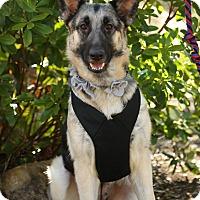 Adopt A Pet :: Margo - Auburn, CA