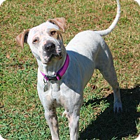 Adopt A Pet :: Mae - Shreveport, LA