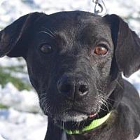 Adopt A Pet :: Remington - Valparaiso, IN
