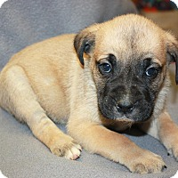 Adopt A Pet :: Kennedy - Adoption pending - Sparta, NJ